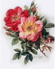 画家用画笔描绘下细腻的笔触,画下鲜花灿烂的绽放