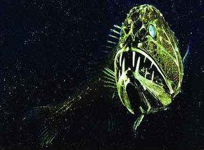 ...海沟深海搜查 海底生物千奇百怪