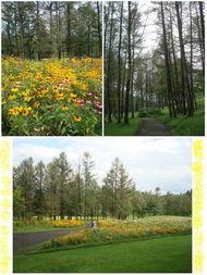 北海道逍遥之旅 之四 8.8 富良野风之花园 森林智者的露台 缆车 北海道...