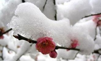 大雪的由来 有关雪的谚语