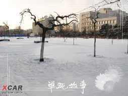 标题 大雪小雪又一年