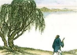 描写 柳树 的优美句子 描写 柳树 的 诗句 大图 还