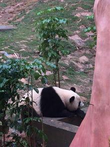 广州长隆野生动物世界 特定日成人票长隆野生动物园说真的,我自己...