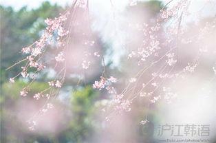 韩语美句 盛开的鲜花