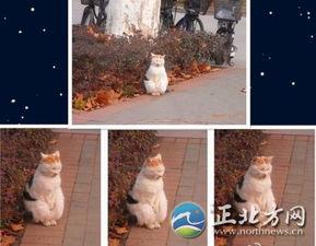 枪神纪猫小萌h文-南京搓手猫走红 卖萌猫咪大盘点