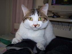 谜男方法猫绳-爪子腿上的猫 绳 饼儿大战