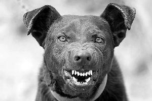 电梯里,进来一只狗流氓,色迷迷地把电