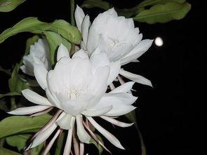 在夏季最晚开的花是什么花