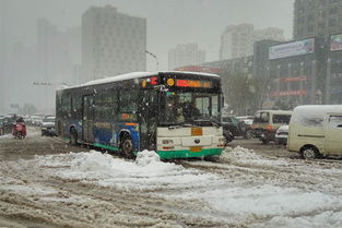 0088aaa公车-市区公交线路全线运营-aaa 欢迎您来到中国临沂政府站