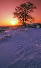 夕阳下的初雪