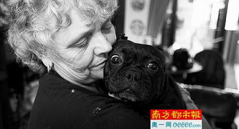 百香果柠檬蜜鸣人vs佩恩-狗狗如果得病了,两人也不吝花钱.他们的一条斗牛犬眼盲了,琳恩说...