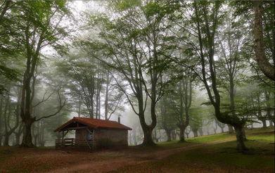 幻禁-...己处在一个时间禁止的空间里.然而,每当我们想到森林中的房?-林...