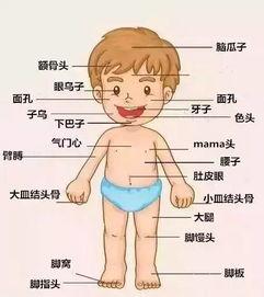 上海人体构造图-上海话速成秘籍 必须收藏肯定有用