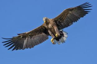飞翔的老鹰图片 第10张