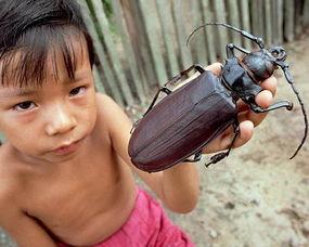 虫来的修界-盘点世上现存昆虫界中的十大庞然大物