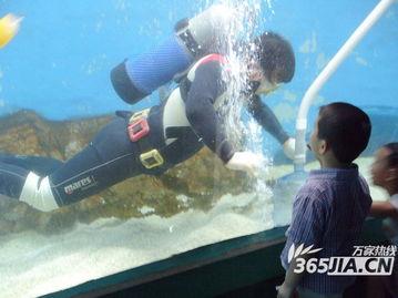 鲍文浩眼中的海洋世界 大螃蟹也能沐浴阳光