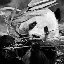 直指其防癌效果虚无缥缈.西湖龙井茶产业协会会长商建农认为,熊...