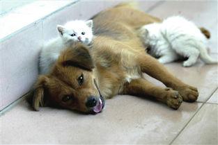 小黄狗笑的动态表情包-丧子狗妈移爱无娘小猫 上演 猫狗一家亲