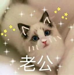 猫咪表情包 萌猫可爱表情带字的图片 2