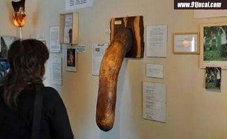 男性丁丁博物馆 他的丁丁长度170厘米堪称丁丁之王