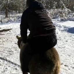 壮熊玩肌肉男-在俄罗斯的北奥塞梯-阿兰共和国,该男子被拍到和一只幼年棕熊打斗...