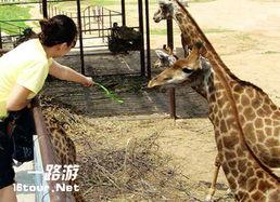 ...0元八达岭野生动物园成人电子票 亚洲最大的山地野生动物园,集动...