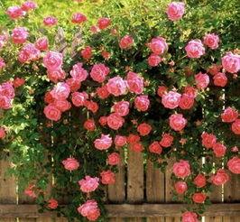 花香有毒可致命 哪些鲜花不适合摆在家