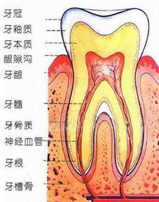 健康的牙齿都是一样的,而坏牙却各自