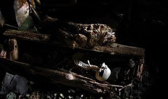 女尊男卑 苏州神一样存在的神秘古墓