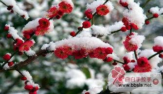 春夏秋冬,花开花落