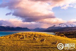 Lake Pukaki 摄影6星 观光6星-如何拍出美丽新西兰 找对适合的摄影场景