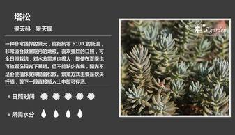 ...最全的多肉植物名字对照图,终于找齐了