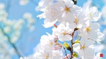 负春光不负己,绽放胜于繁花的美丽.
