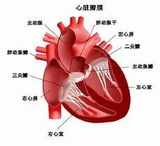 和其他合并症,如心力衰竭等掩盖.患者常有持续性心前区疼痛,卧位...