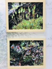 ...:苔藓高清图与科学画均由深圳市中国科学院仙湖植物园张力老师...