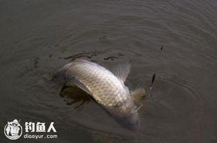 冬季如何才能钓到鱼