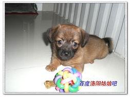 我家狗狗的明星照