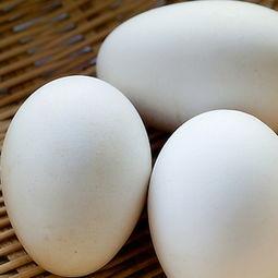 肉末清蒸鹅蛋