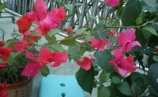 夏季开红色的花,这是什么花卉植物