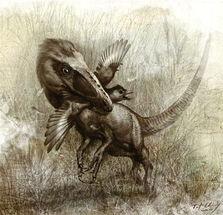 星起羽落-中加科学家首次揭秘带羽恐龙晚餐化石