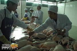 ...最大的家禽定点屠宰企业落户北海,咱们也能吃上 放心禽肉 啦 组图