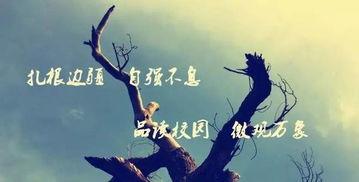 永不放弃的追逐
