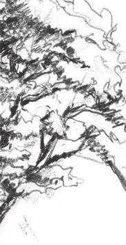 速写杉树的画法步骤六-速写杉树的绘画技法 3