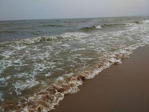 绿野清海 保护海洋 清洁海滩 我们在行动