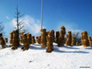 冬日恋歌专辑壁纸 第5张 自然风景壁纸 高清桌面壁纸
