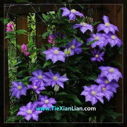 什么紫色的花在夏季开