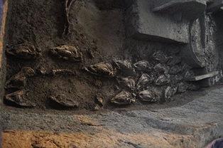 晋至宋代24座墓葬,随后进行了发掘清理.其中M226、M234、M235...