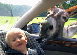 ...hrough zoo 当人类从动物园驶过
