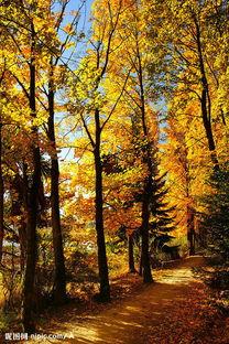 叶落苍穹-自然景观 秋天 落叶图片