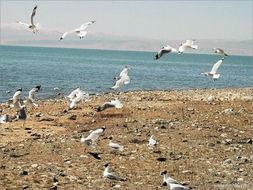 北方候鸟南下广东过冬遭捕杀 当地流行 鸟宴